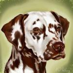 "Our main breeding bitch ""Mochaccino Dalmatian Dream"" (called Mocha) in eternal memory"