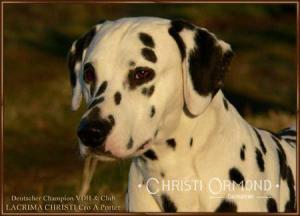 Lacrima Christi Cro A Porter