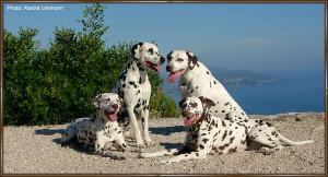 von links Anja und Lacrima Christi Cro A Porter, rechts Mochaccino Dalmatian Dream und Lacrima Christi Calypso
