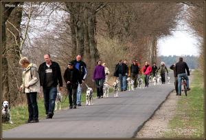 Dog Training Seminar: The common obedient walk with dogs