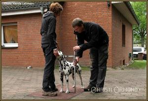 Dog Handling Seminar: Showing  the dog for measuring