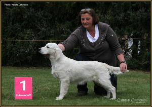 Dog handling Seminar: Present the dog in front of the placement sign