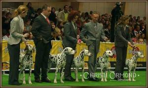 Breed Group Lacrima Christi Dalmatians World Dog Show Poland 2006