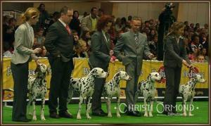 Zuchtgruppe Lacrima Christi Dalmatians World Dog Show Polen 2006