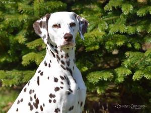 Christi ORMOND Incognito Celebrity 4 Jahre alt