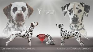 Vater: Insomnium Blood Diamond und Mutter: Christi ORMOND Real Diamond