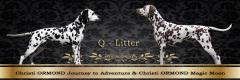 Christi ORMOND Q - Litter