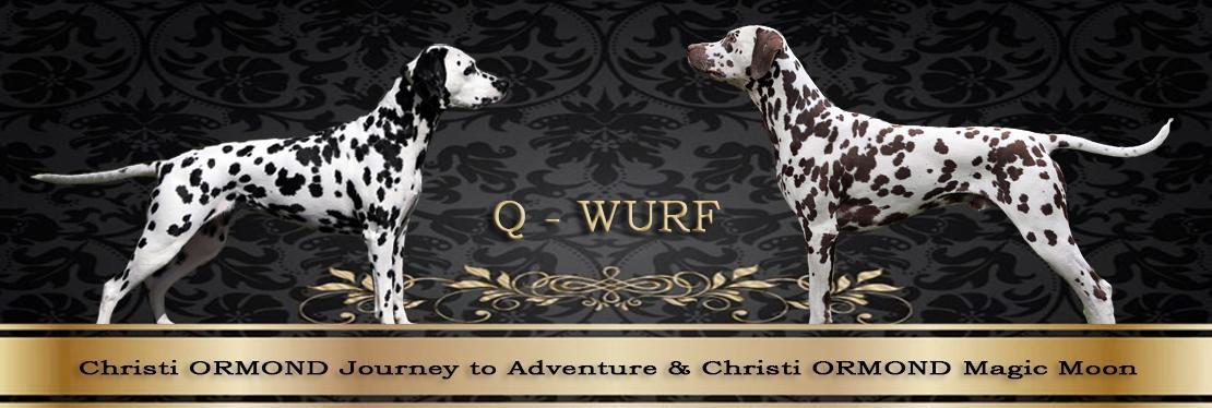 Christi ORMOND Q - Wurf
