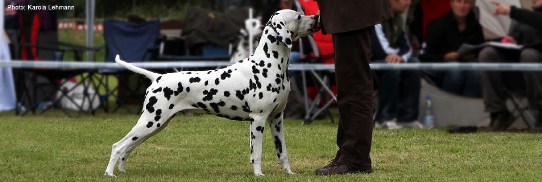 Dog Handling Presentations 2013