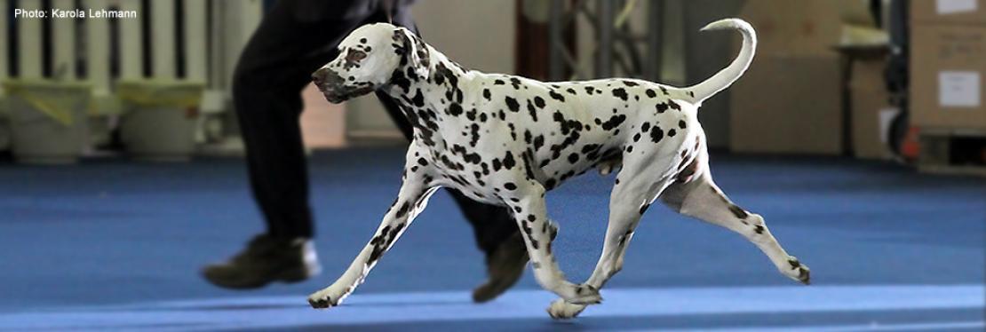 Dog Handling Presentations 2010