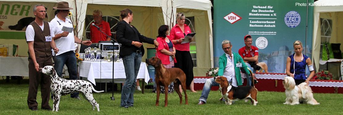 Dog Handling Presentations 2015