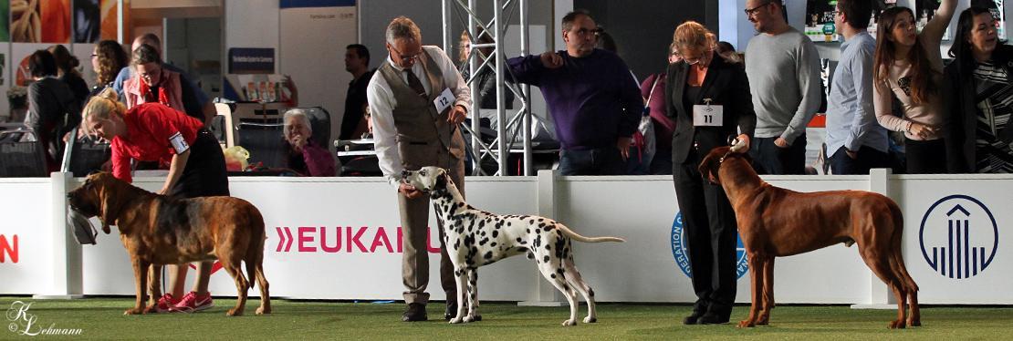 Doghandling Präsentationen 2018