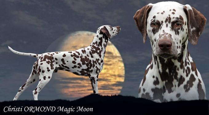 Deckrüde Christi ORMOND Magic Moon