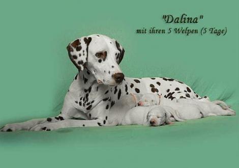 Dalina mit ihrem Christi ORMOND D - Wurf 1. Lebenswoche