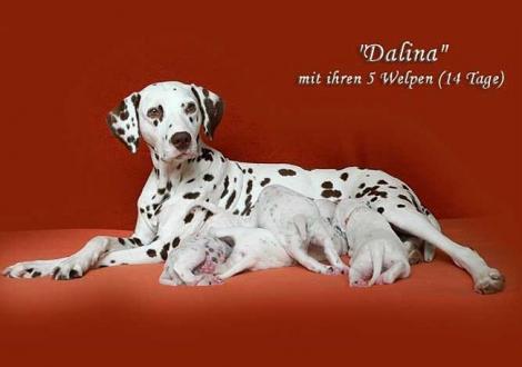 Dalina mit ihrem Christi ORMOND D - Wurf 2. Lebenswoche