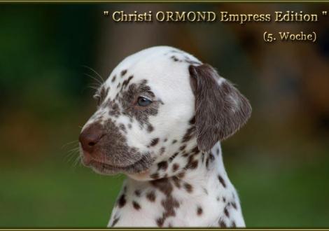 Christi ORMOND Empress Edition