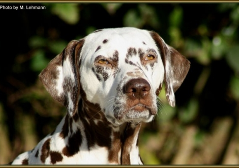 Mutter Mochaccino Dalmatian Dream
