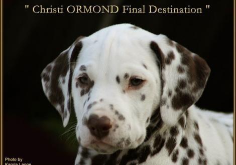 Christi ORMOND Final Destination