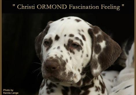 Christi ORMOND Fascination Feeling
