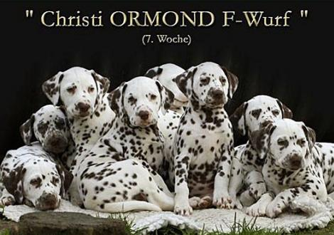 Christi ORMOND F - Wurf 7. Lebenswoche