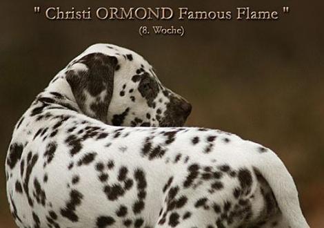 Christi ORMOND Famous Flame (genannt Pheebie) 8. Lebenswoche