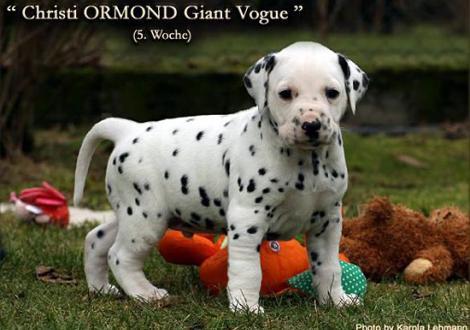 Christi ORMOND Giant Vogue