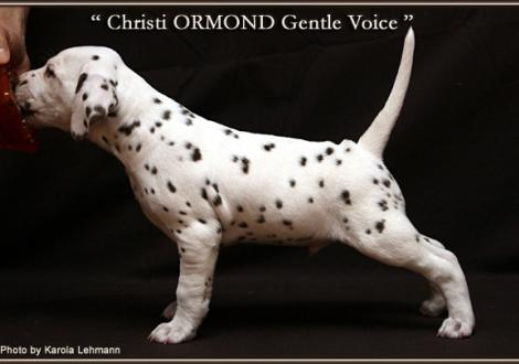Christi ORMOND Gentle Voice
