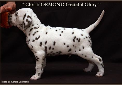 Christi ORMOND Grateful Glory