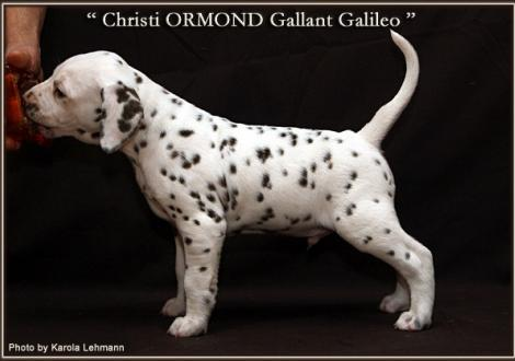 Christi ORMOND Gallant Galileo