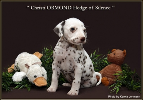 Christi ORMOND Hedge of Silence