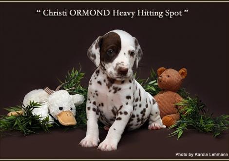 Christi ORMOND Heavy Hitting Spot