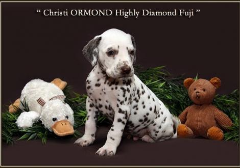Christi ORMOND Highly Diamond Fuji