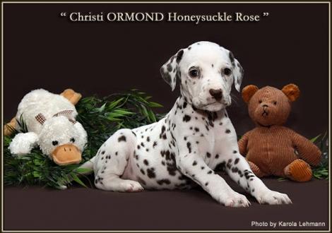 Christi ORMOND Honeysuckle Rose