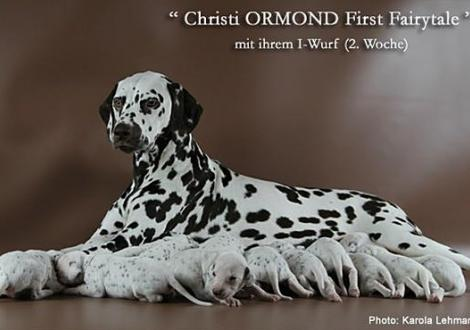 Christi ORMOND First Fairytale mit ihrem Christi ORMOND I - Wurf 2. Lebenswoche