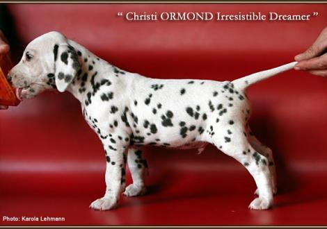 Christi ORMOND Irresistible Dreamer