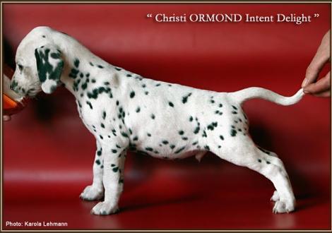 Christi ORMOND Intent Delight