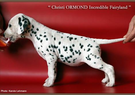 Christi ORMOND Incredible Fairyland