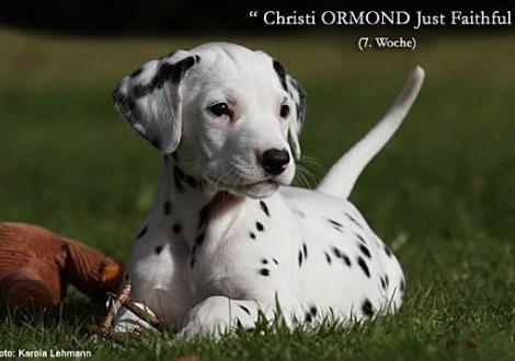 Christi ORMOND J - Wurf 7. Lebenswoche