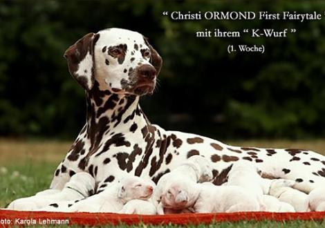 Christi ORMOND First Fairytale mit ihrem Christi ORMOND K - Wurf 1. Lebenswoche