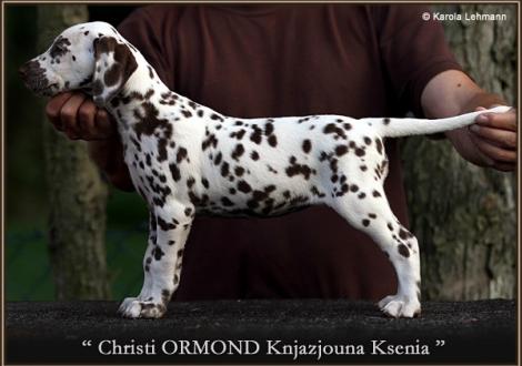 5. Prinzessin (Knjazjouna) - Halsband Gelb, Christi ORMOND Knjazjouna Ksenia