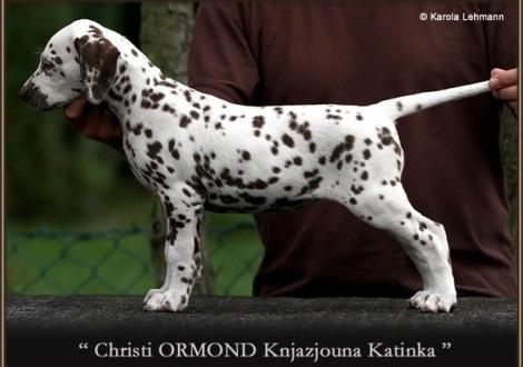 6. Prinzessin (Knjazjouna) - Halsband Orange, Christi ORMOND Knjazjouna Katinka