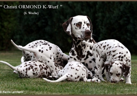 Impressionen 6. Lebenswoche Christi ORMOND K - Wurf