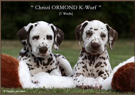 Impressionen 7. Lebenswoche Christi ORMOND K - Wurf