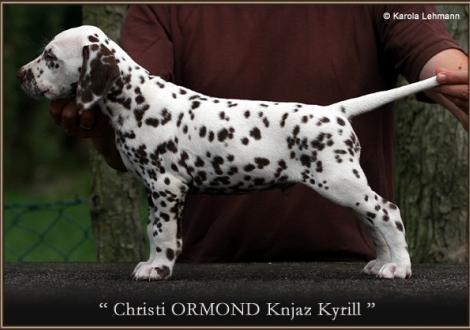 Christi ORMOND Knjaz Kyrill