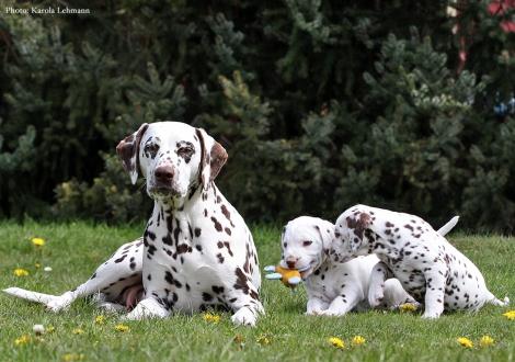 Mutter Christi ORMOND Knjazjouna Kyra mit ihren Zwillingen