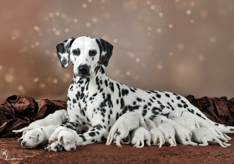 Christi ORMOND Now and Forever with her Christi ORMOND V - Litter 1st week of life