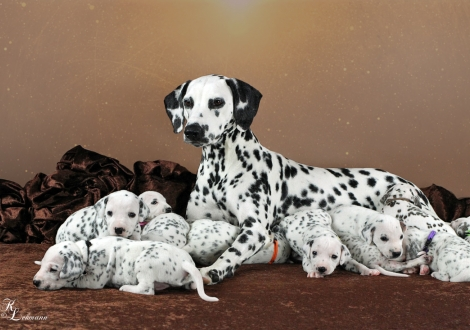 Christi ORMOND Now and Forever with her Christi ORMOND V - Litter 3rd week of life