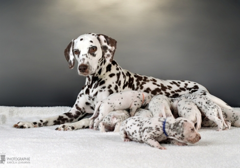 Christi ORMOND Immortal Soul with her Christi ORMOND X - Litter 3rd week of life
