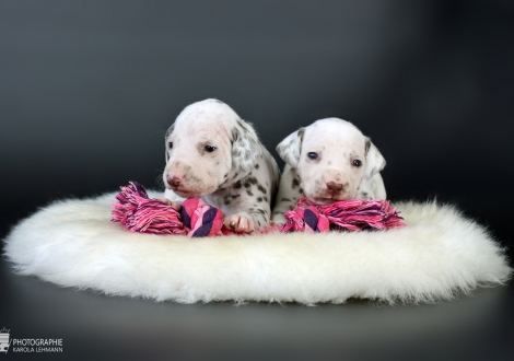 Christi ORMOND Xact Observer | male color white - liver (collar gray) and on the right Christi ORMOND Xplorer on the Moon | female color white - liver (collar pink)