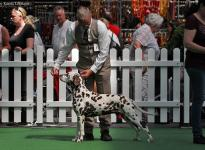 Internationale Rassehunde Ausstellung in Opole - Polen